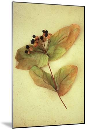 Dried Plant-Den Reader-Mounted Premium Photographic Print