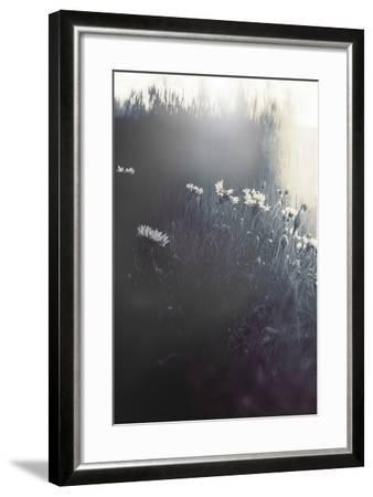 Flowers in Long Grass-Mia Friedrich-Framed Photographic Print