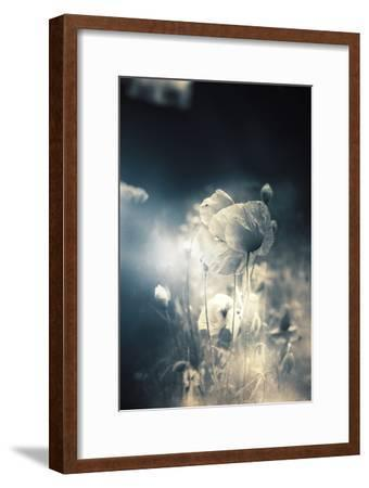 Close Up of Poppy-Mia Friedrich-Framed Photographic Print