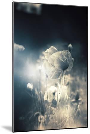 Close Up of Poppy-Mia Friedrich-Mounted Photographic Print