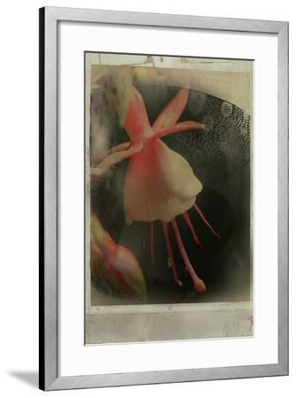 Close Up of Flowers-Mia Friedrich-Framed Photographic Print