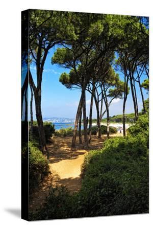 Ile Sainte Marguerite - Cannes - France-Philippe Hugonnard-Stretched Canvas Print