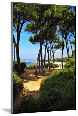 Ile Sainte Marguerite - Cannes - France-Philippe Hugonnard-Mounted Photographic Print