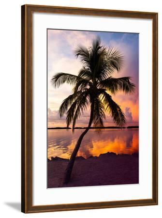 Palm Tree at Sunset - Florida-Philippe Hugonnard-Framed Photographic Print