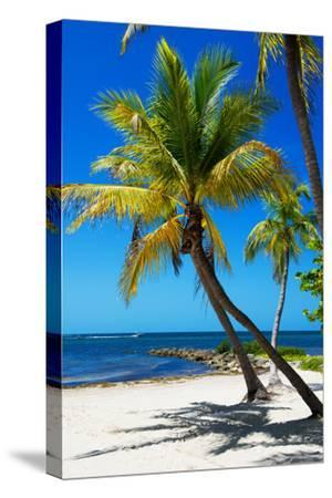 Palms on a White Sand Beach in Key West - Florida-Philippe Hugonnard-Stretched Canvas Print