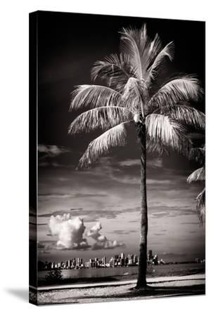 Palm Tree overlooking Downtown Miami - Florida-Philippe Hugonnard-Stretched Canvas Print