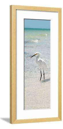 White Heron - Florida-Philippe Hugonnard-Framed Photographic Print