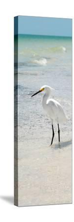 White Heron - Florida-Philippe Hugonnard-Stretched Canvas Print
