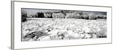 China 10MKm2 Collection - Another Look - Lotus Lake-Philippe Hugonnard-Framed Photographic Print