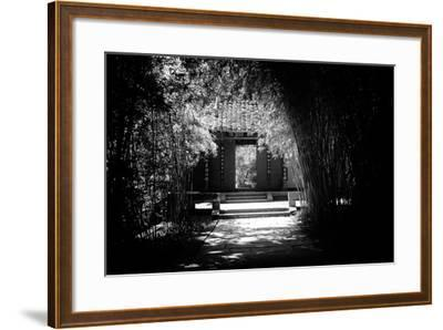 China 10MKm2 Collection - Bamboo Forest-Philippe Hugonnard-Framed Photographic Print