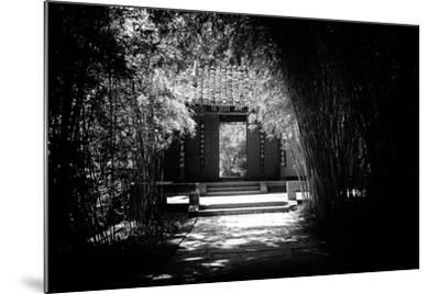 China 10MKm2 Collection - Bamboo Forest-Philippe Hugonnard-Mounted Photographic Print