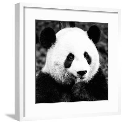 China 10MKm2 Collection - Giant Panda-Philippe Hugonnard-Framed Photographic Print