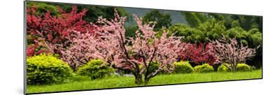 China 10MKm2 Collection - Beautiful Asian Garden-Philippe Hugonnard-Mounted Photographic Print