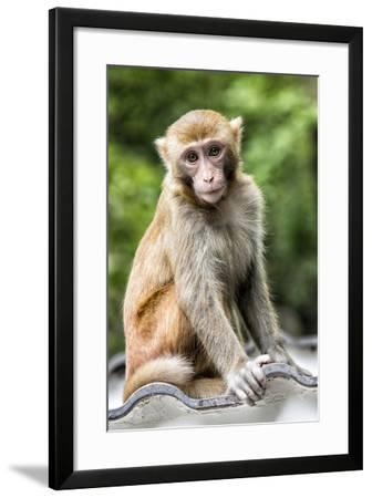 China 10MKm2 Collection - Monkey Portrait-Philippe Hugonnard-Framed Photographic Print