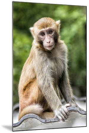 China 10MKm2 Collection - Monkey Portrait-Philippe Hugonnard-Mounted Photographic Print