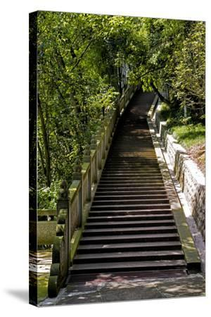 China 10MKm2 Collection - Stairway in the Forest-Philippe Hugonnard-Stretched Canvas Print