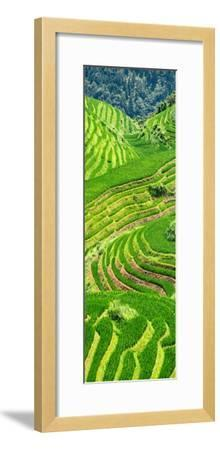 China 10MKm2 Collection - Rice Terraces - Longsheng Ping'an - Guangxi-Philippe Hugonnard-Framed Photographic Print