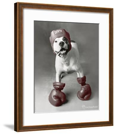 Boxing Dog-Rachael Hale-Framed Photo