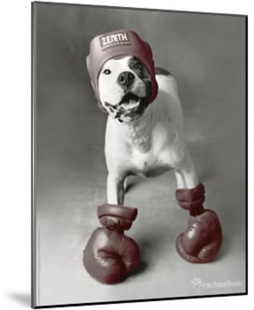 Boxing Dog-Rachael Hale-Mounted Photo