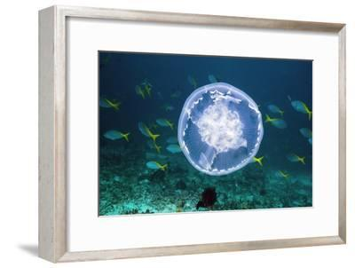 Fish And Jellyfish Over a Coral Reef-Georgette Douwma-Framed Photographic Print