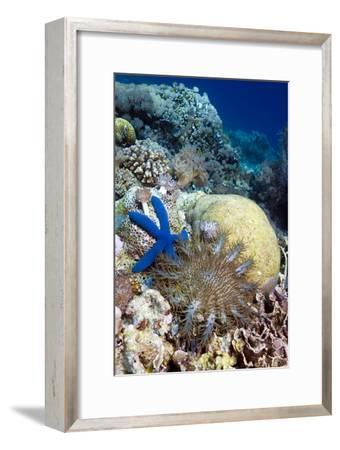Starfish-Georgette Douwma-Framed Photographic Print