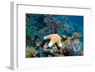 Granulated Seastar-Georgette Douwma-Framed Photographic Print