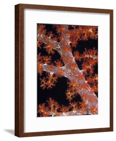 Soft Coral-Georgette Douwma-Framed Photographic Print