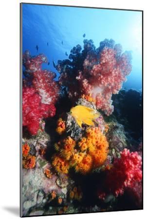 Golden Damselfish-Georgette Douwma-Mounted Photographic Print