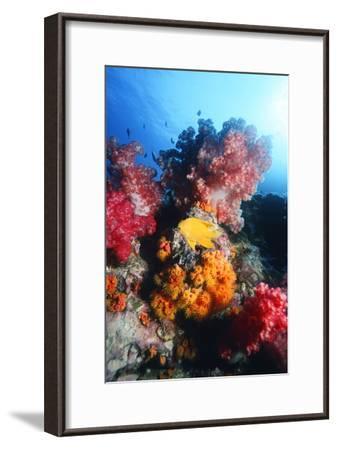 Golden Damselfish-Georgette Douwma-Framed Photographic Print