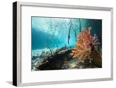 Corals In a Mangrove Swamp-Georgette Douwma-Framed Photographic Print