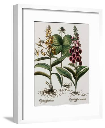 Medicinal Plants-Georgette Douwma-Framed Photographic Print