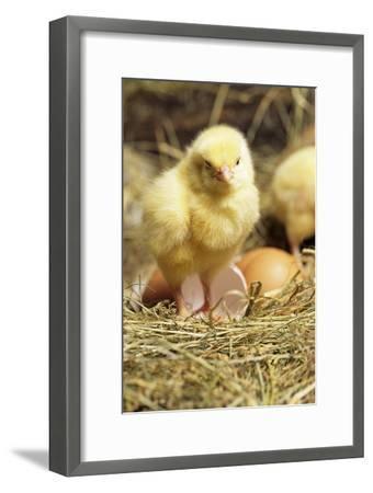 Chick-David Aubrey-Framed Photographic Print