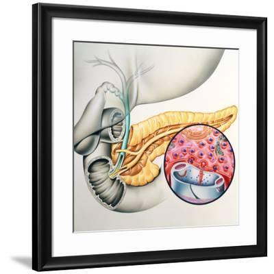 Artwork of the Pancreas Showing Insulin Production-John Bavosi-Framed Photographic Print