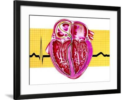 Artwork of Sectioned Heart with Healthy ECG Trace-John Bavosi-Framed Photographic Print