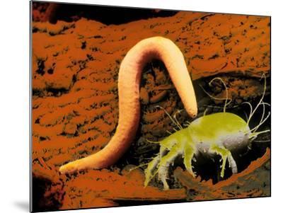 False-colour SEM of a Nematode Worm & Acarus Siro-Dr. Jeremy Burgess-Mounted Photographic Print