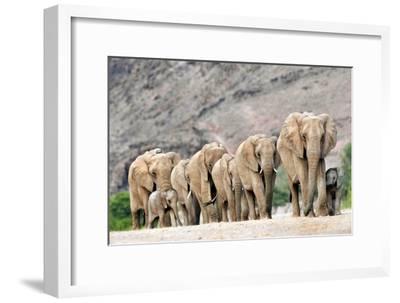 Desert-adapted Elephants-Tony Camacho-Framed Photographic Print