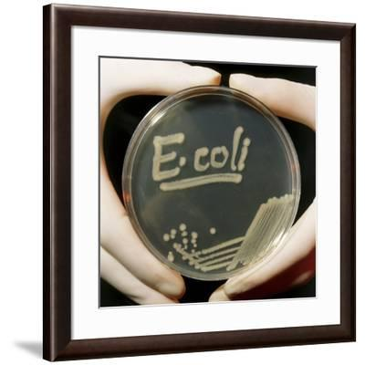 Petri Dish Culture of E.coli Bacteria-Dr. Jeremy Burgess-Framed Photographic Print