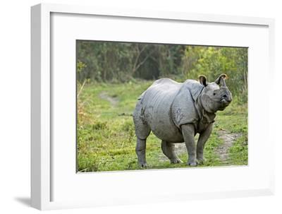 Indian Rhinoceros-Tony Camacho-Framed Photographic Print