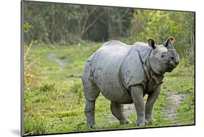 Indian Rhinoceros-Tony Camacho-Mounted Photographic Print