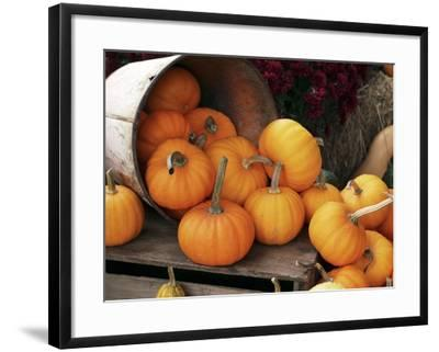 Harvested Pumpkins-Tony Craddock-Framed Photographic Print