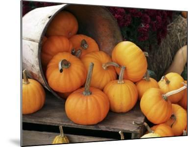 Harvested Pumpkins-Tony Craddock-Mounted Photographic Print