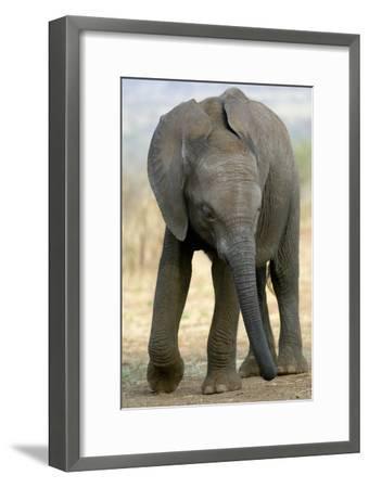 African Elephant-Tony Camacho-Framed Photographic Print