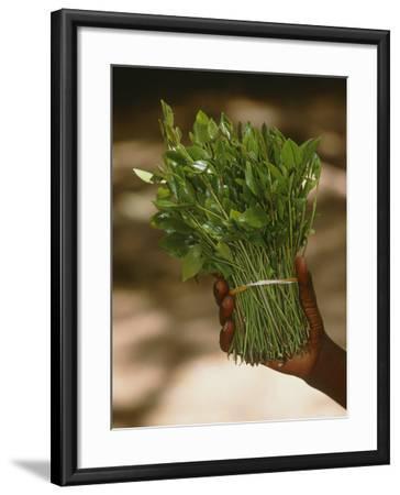 Chat (Catha Edulis)-Tony Camacho-Framed Photographic Print