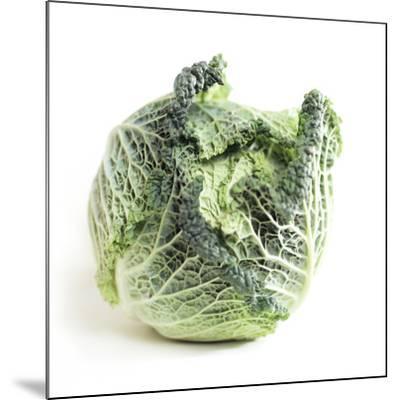 Cabbage-Cristina-Mounted Photographic Print