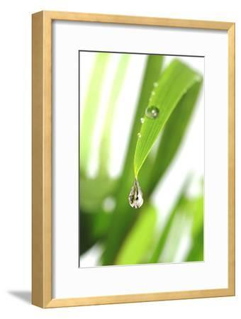 Dewdrop on a Leaf-Crown-Framed Photographic Print
