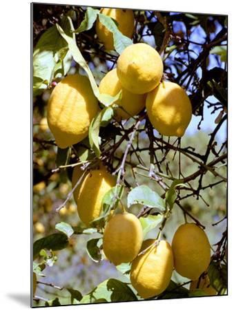 Lemons-Victor De Schwanberg-Mounted Photographic Print