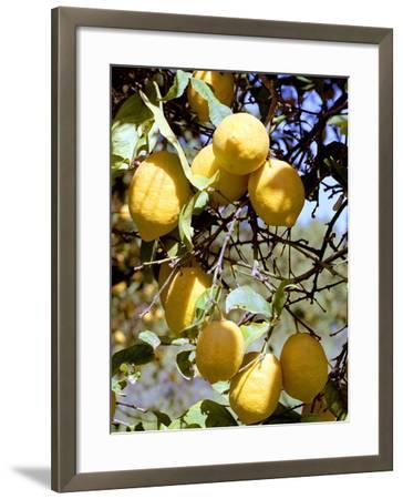 Lemons-Victor De Schwanberg-Framed Photographic Print