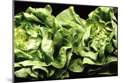 Lettuces-Victor De Schwanberg-Mounted Photographic Print