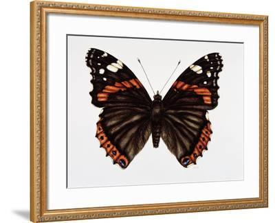 Red Admiral Butterfly-Lizzie Harper-Framed Photographic Print