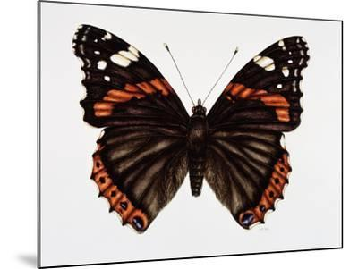 Red Admiral Butterfly-Lizzie Harper-Mounted Photographic Print